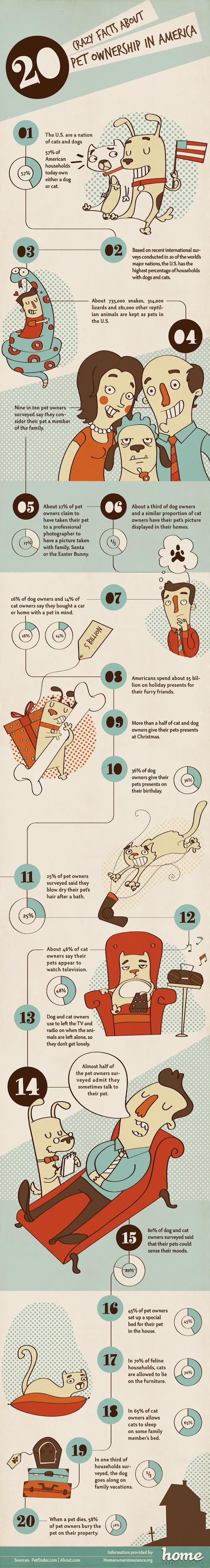 Pets Infographic - Facts About Pet Owners